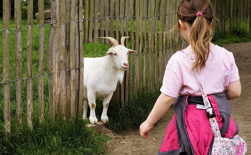 goat-1440466_1280
