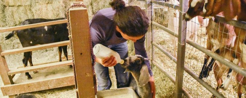 gloria-and-goats_30153257152_o